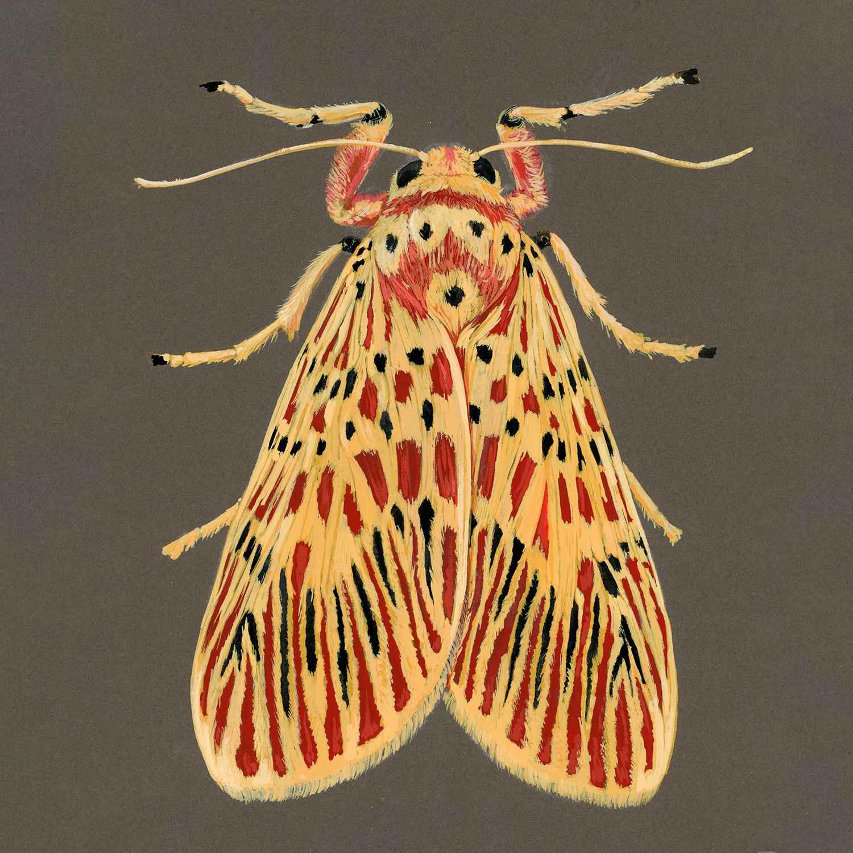 Footman Moth by  Paul Atwell - Masterpiece Online