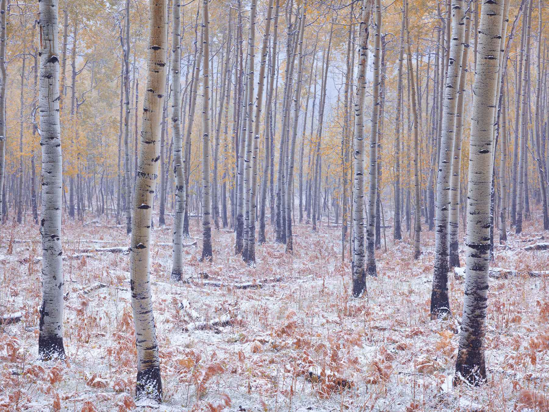 Early Winter Snow by  Steven Friedman - Masterpiece Online