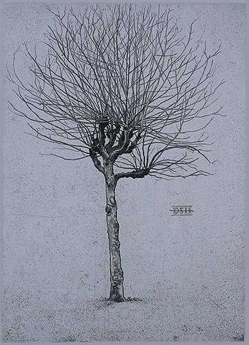 Plane Tree  A by  David Smith-Harrison - Masterpiece Online