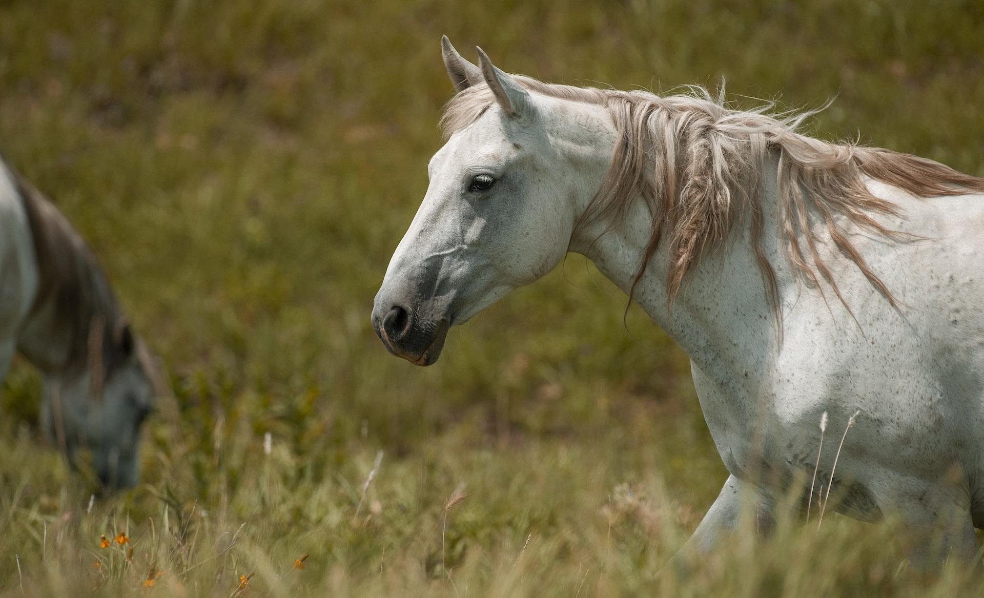 Wild Mustangs of the ... by  Teresa Grove - Masterpiece Online