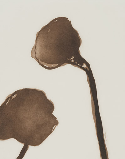 Lotus Pod  by  Angela Hayson - Masterpiece Online