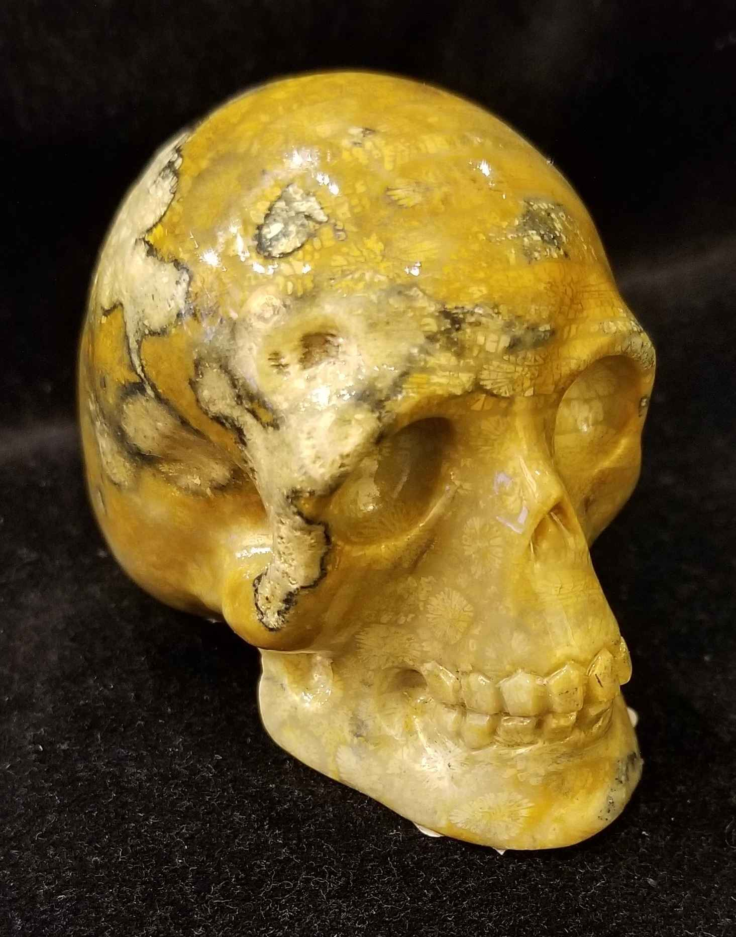 Fossil Coral Skull by   Starborn - Masterpiece Online