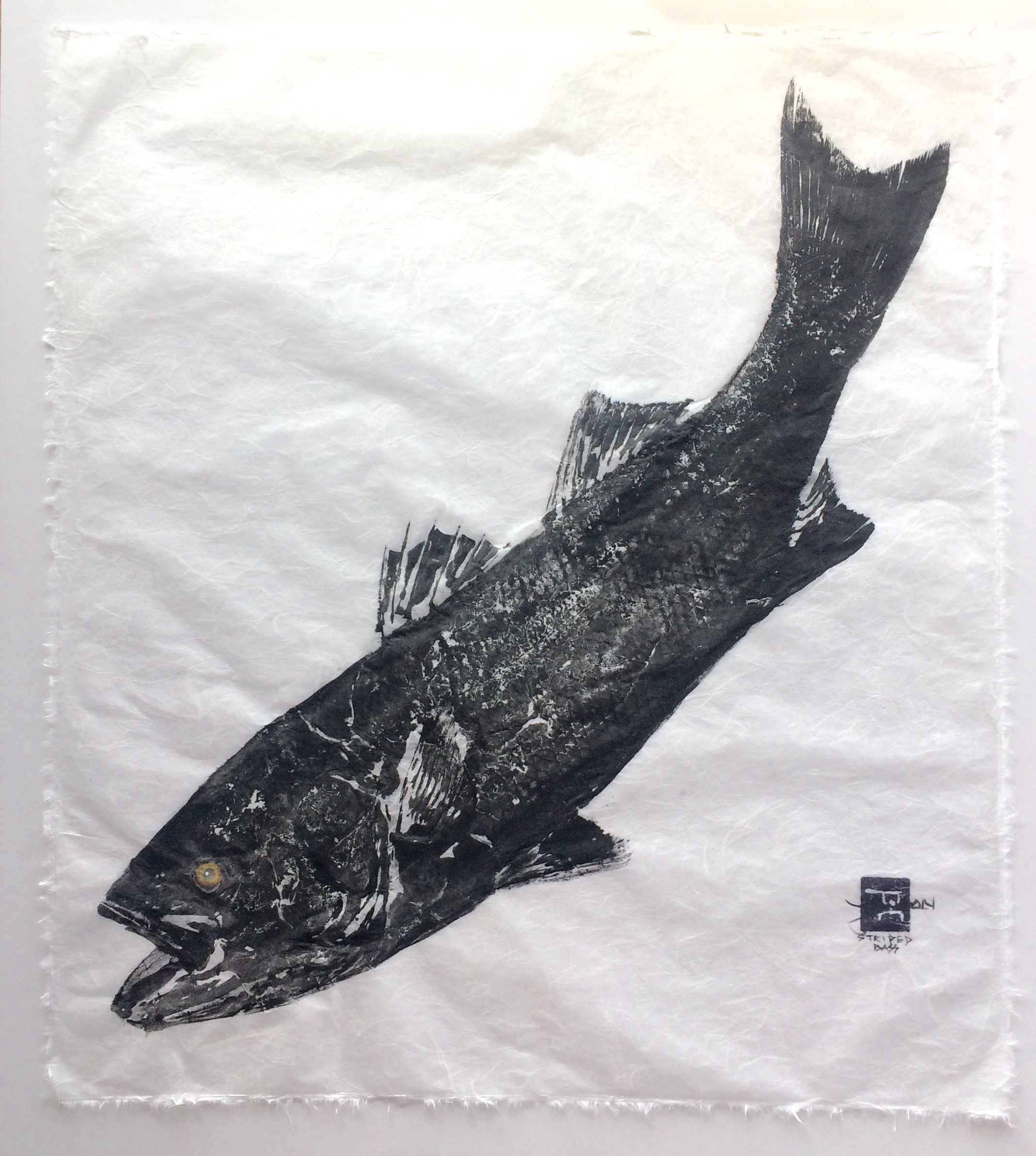 Striped Bass on white... by  Steve London - Masterpiece Online