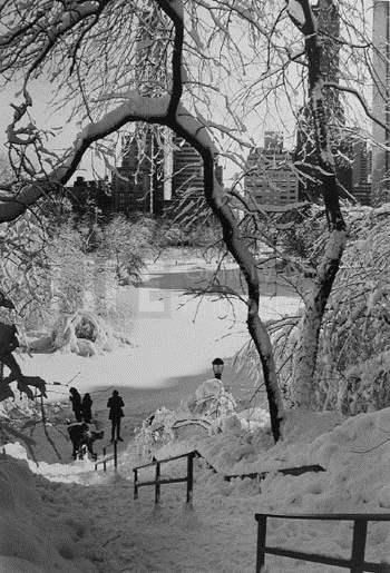Stairs, Central Park by  Alfred Eisenstaedt - Masterpiece Online