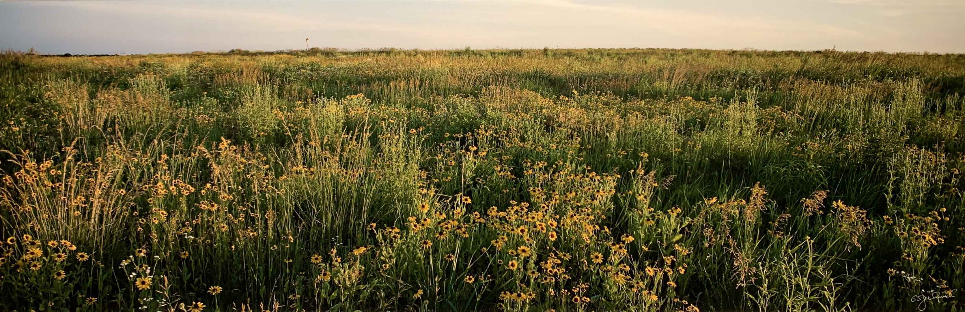 Prairie Flowers by  George Jerkovich - Masterpiece Online