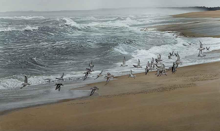 Taking Flight by  Steve Mills - Masterpiece Online