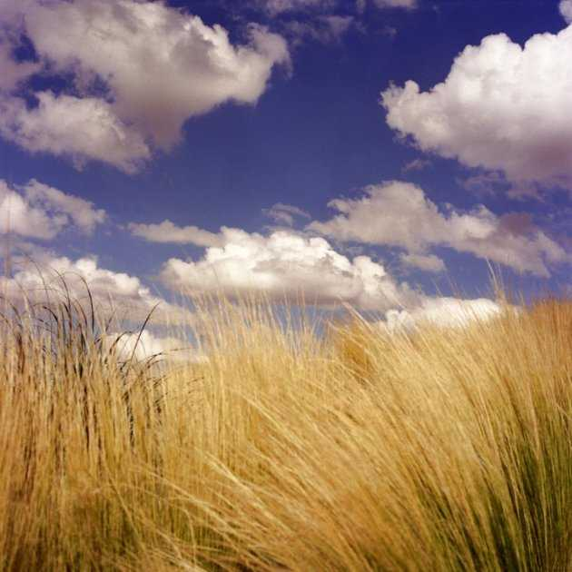 Prairie Grass by  Diana Bloomfield - Masterpiece Online