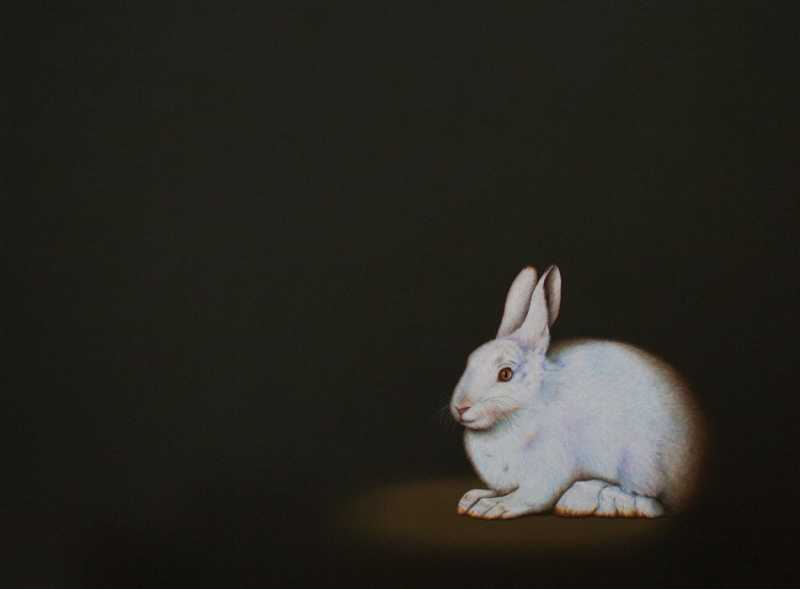 Snowshoe Hare by  Isabelle Du Toit - Masterpiece Online