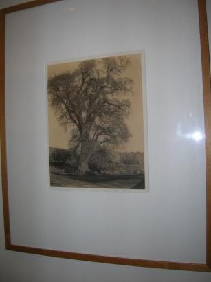 Tree by   Currey - Masterpiece Online