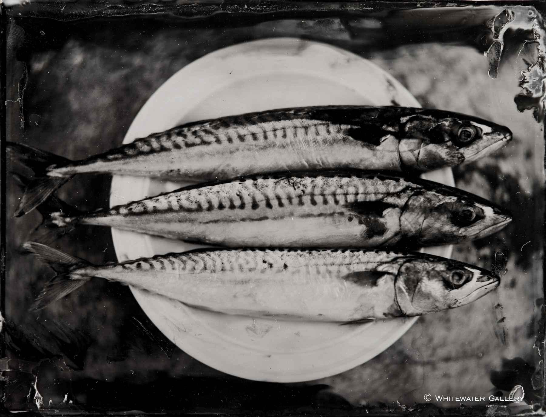 Three Mackerel on a P... by  Nick Reader - Masterpiece Online
