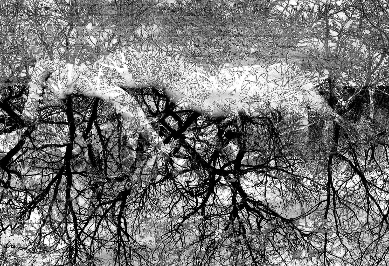 Treeline by  Valerie Christell - Masterpiece Online