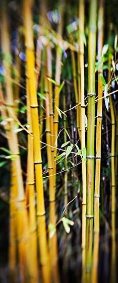 Bamboo Light, 2010 by  Michael Stimola - Masterpiece Online