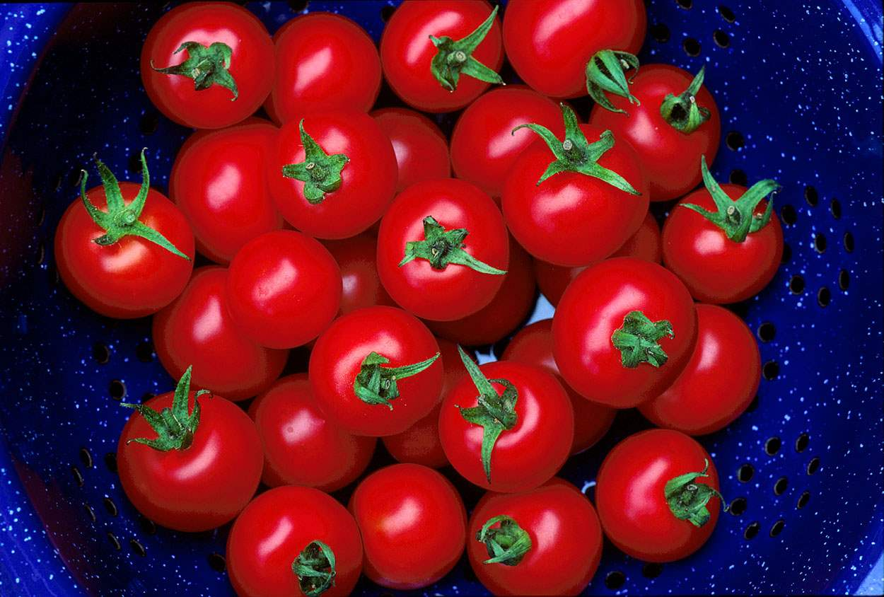 Tomatoes, Farm Pond H... by  Alison Shaw - Masterpiece Online