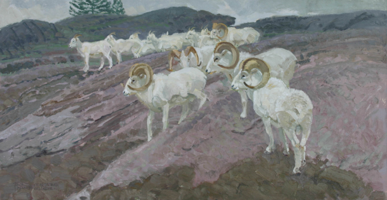 Dall Sheep by  Robert Lougheed - Masterpiece Online