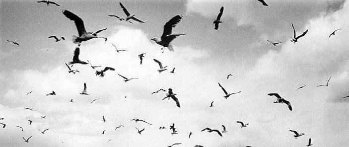Seagulls, Wildlife Re... by  Alfred Eisenstaedt - Masterpiece Online
