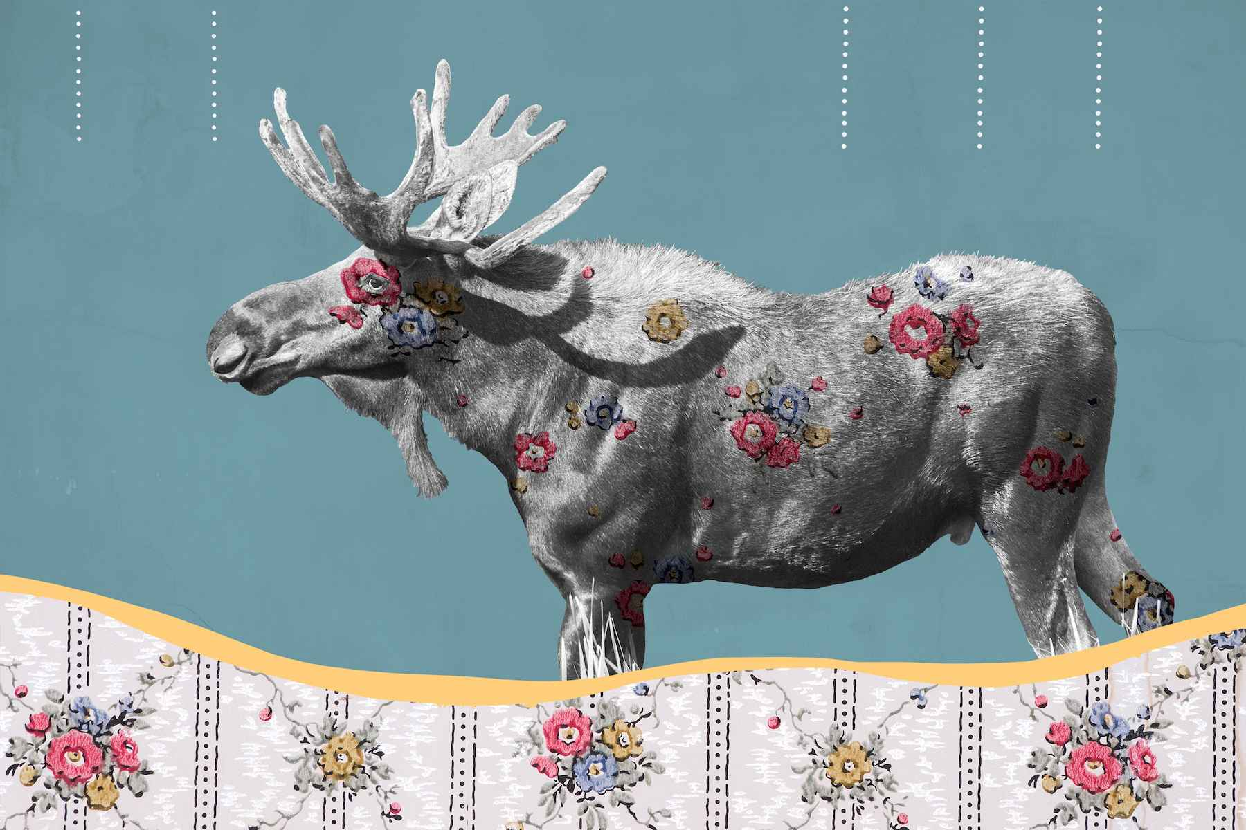 Moose No 2 by  Miles Glynn - Masterpiece Online