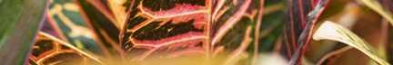 Tropical 8 Ed: 1/65 by  Allen Maertz - Masterpiece Online