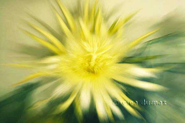 Horton Cereus 3 by  Michael Horton - Masterpiece Online