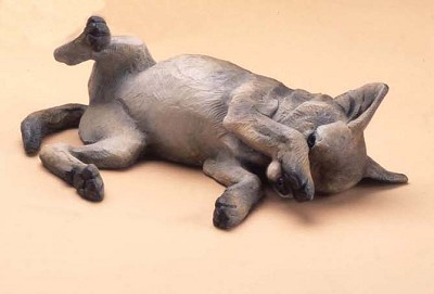 Coyote Pup lying by  Star York - Masterpiece Online