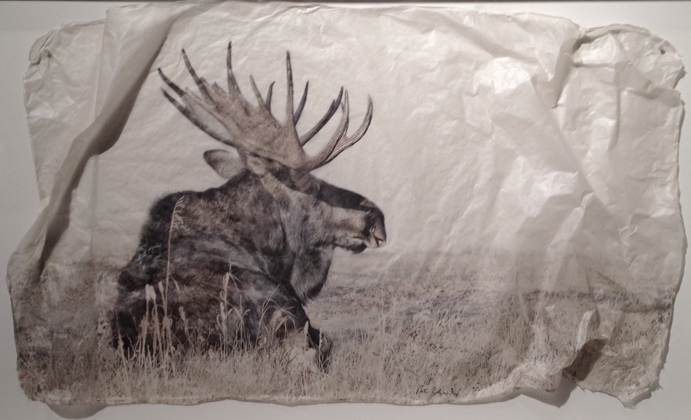 Moose Large by  Pete Zaluzec - Masterpiece Online