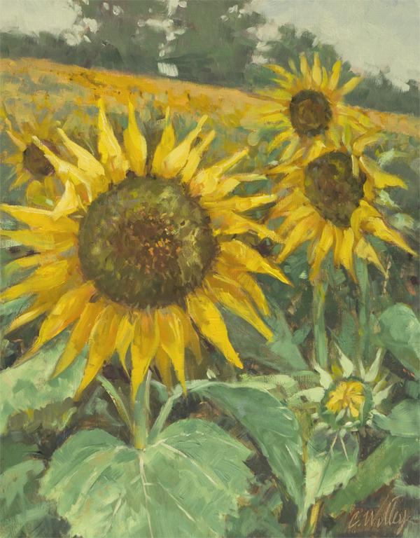 Grinter Farm Sunflowe... by  Chris Willey - Masterpiece Online