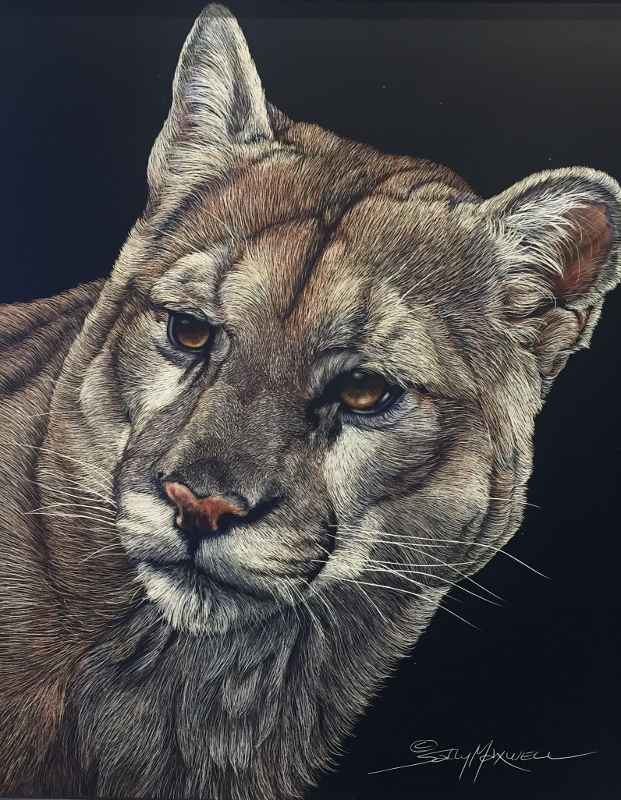 Cougar 3/4 Face  by  Sally Maxwell