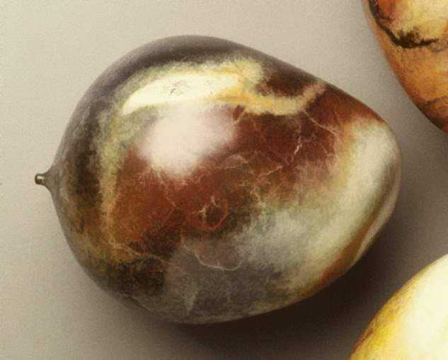 Mango #2 Ed: 1/8 by  David Kuraoka - Masterpiece Online