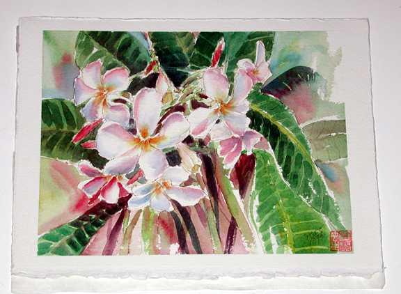 Plumeria Study #1 by  Nancy Poes - Masterpiece Online