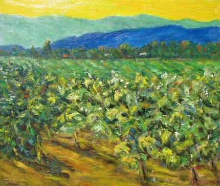 Vineyard Field (Sonom...  by  Andres  Morillo