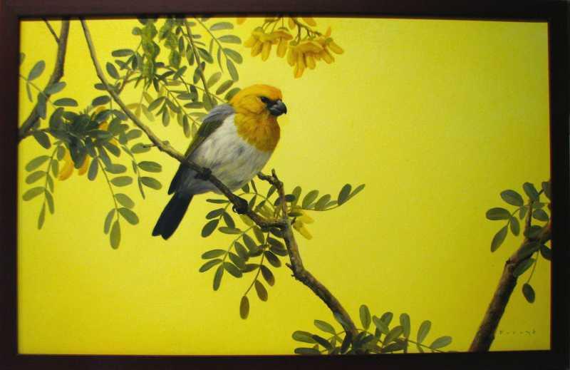 Palila on Yellow by  Michael Furuya - Masterpiece Online