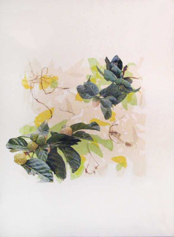 Plant Collage 3 by  Margo Ray - Masterpiece Online