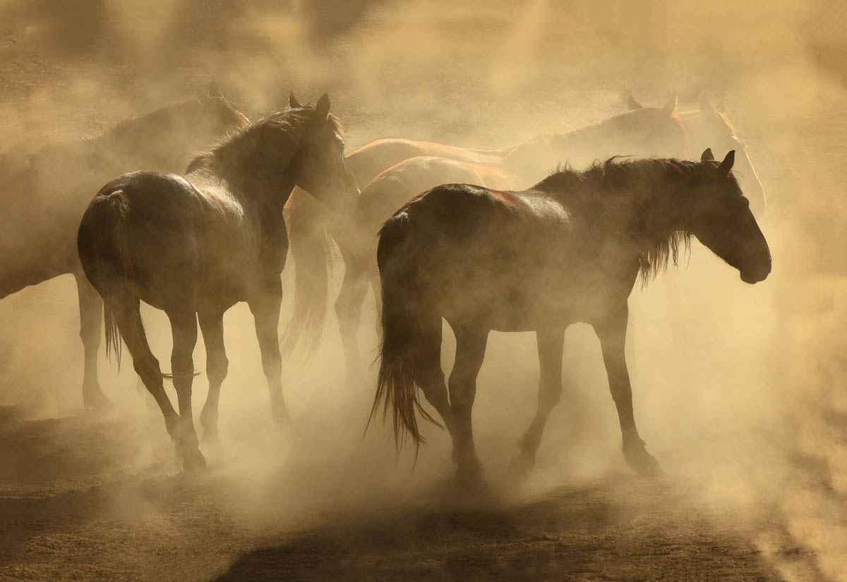 Dusty by  Tony Stromberg - Masterpiece Online
