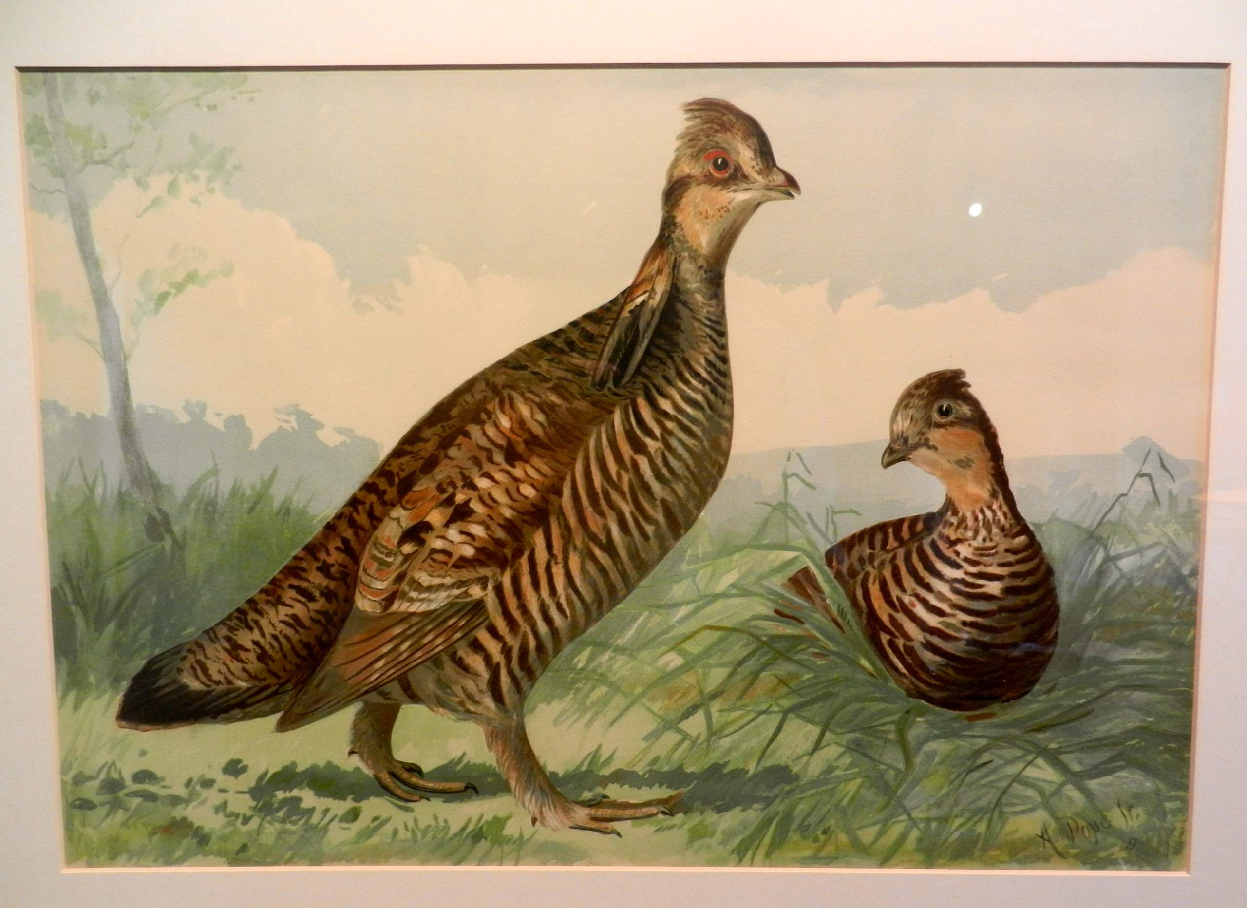 Upland Game Birds and... by  Alexander Pope - Masterpiece Online