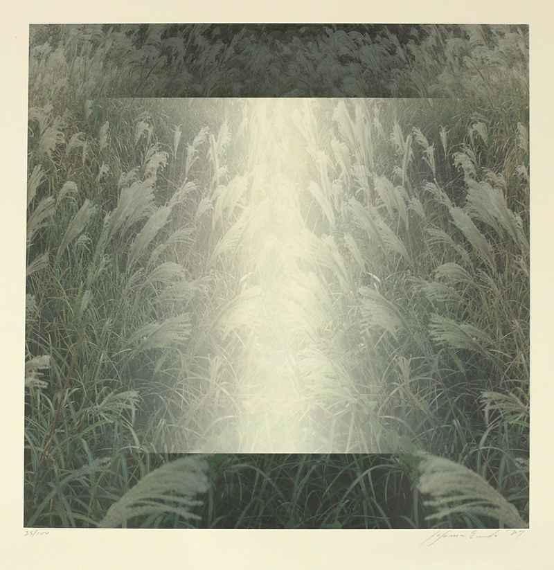 Pampas by  Susumu Endo - Masterpiece Online