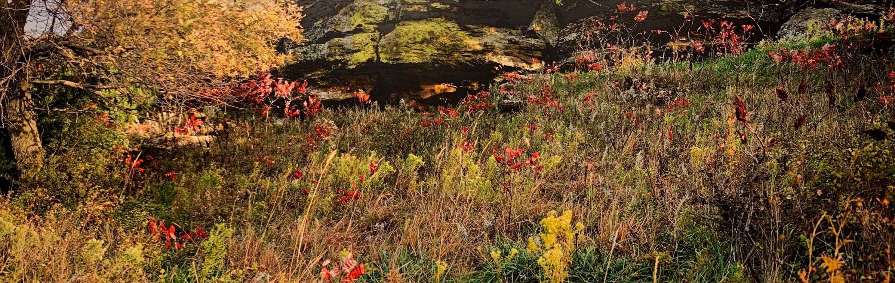 Sumac, Grasses, Outcr... by  George Jerkovich - Masterpiece Online