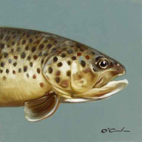 Brown Trout #3