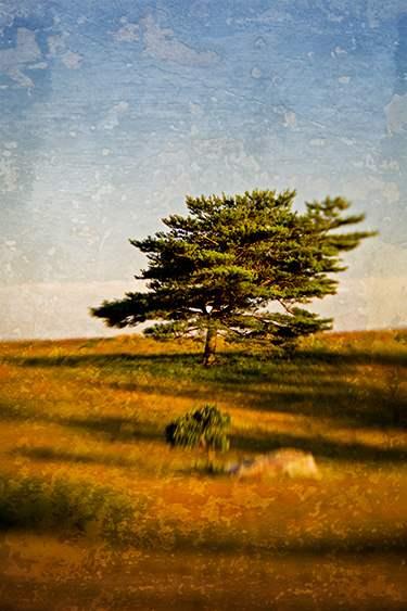 Twilight Pines, 2008 by  Michael Stimola - Masterpiece Online