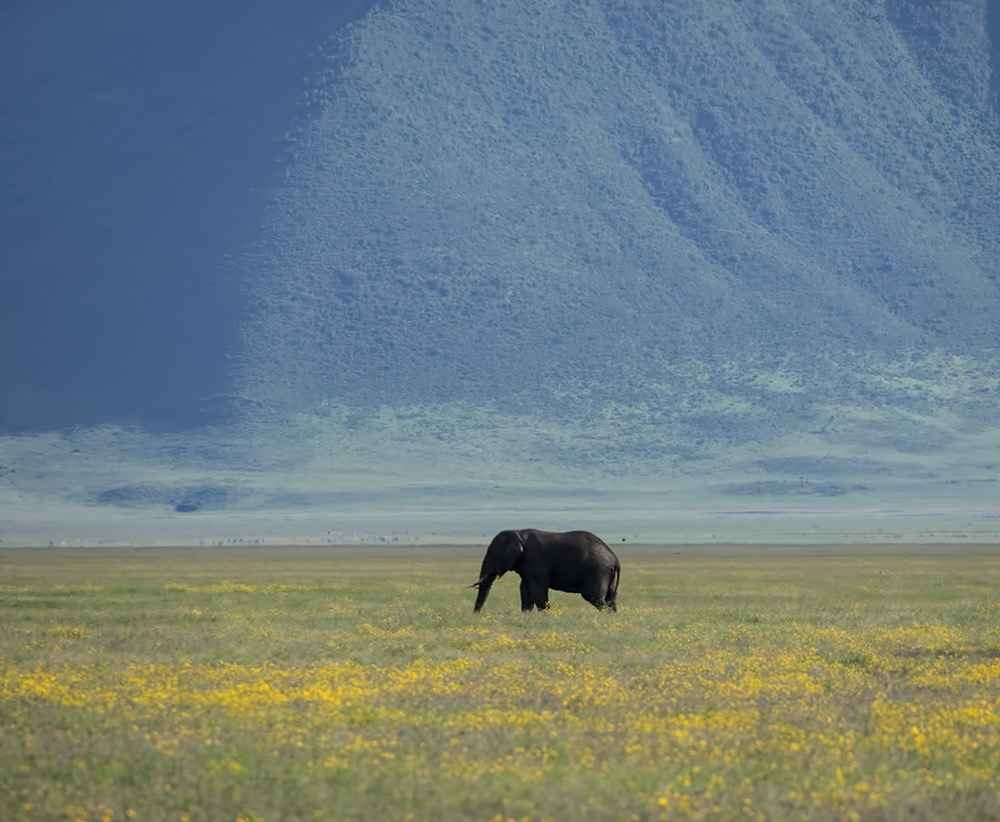 Elephant in Valley