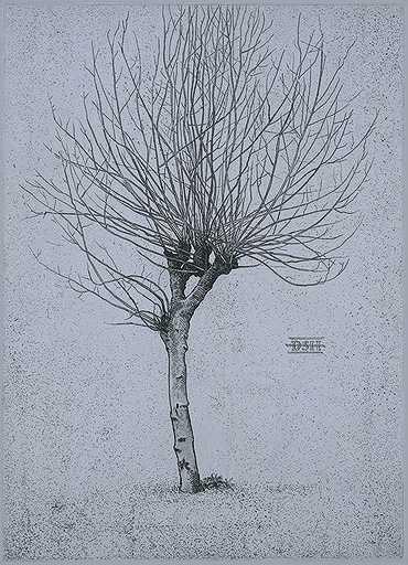 Plane Tree B by  David Smith-Harrison - Masterpiece Online