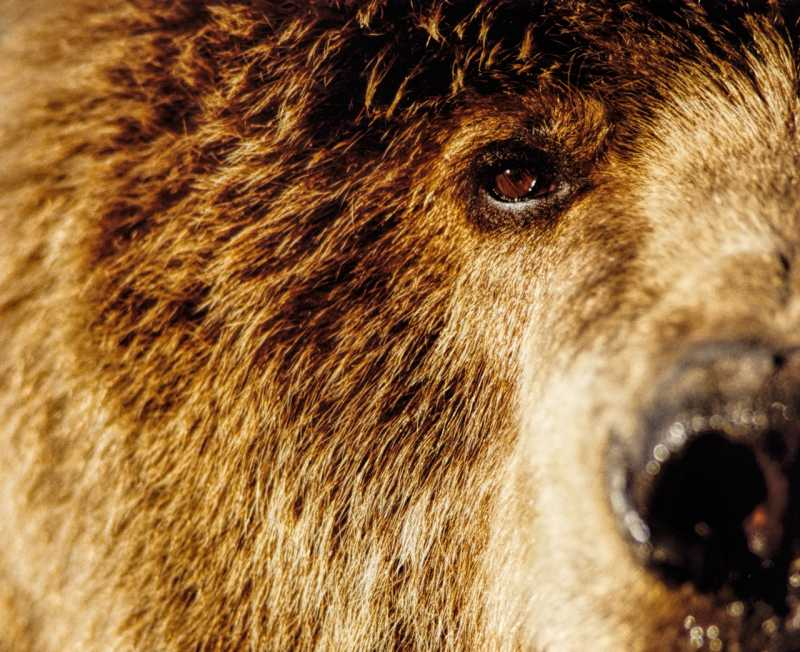 Eye to I ~ Grizzly Be...