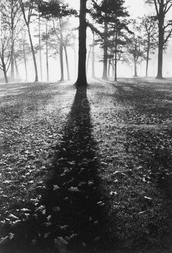 Trees on an autumn mo... by  Alfred Eisenstaedt - Masterpiece Online