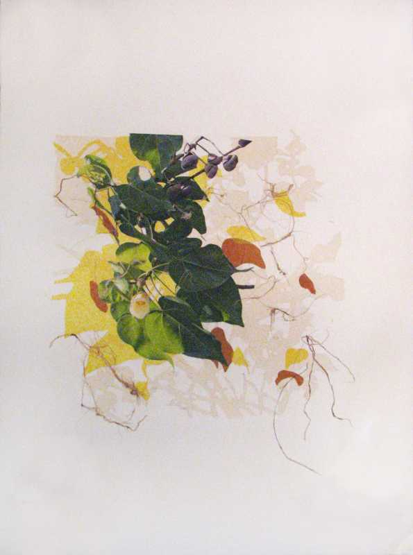 Plant Collage 1 by  Margo Ray - Masterpiece Online