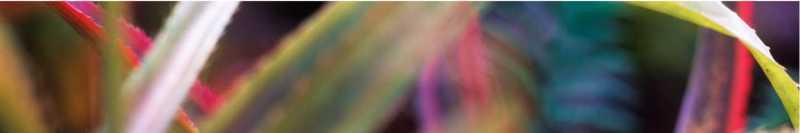 Bromeliad Leaf 3 Ed: ... by  Allen Maertz - Masterpiece Online
