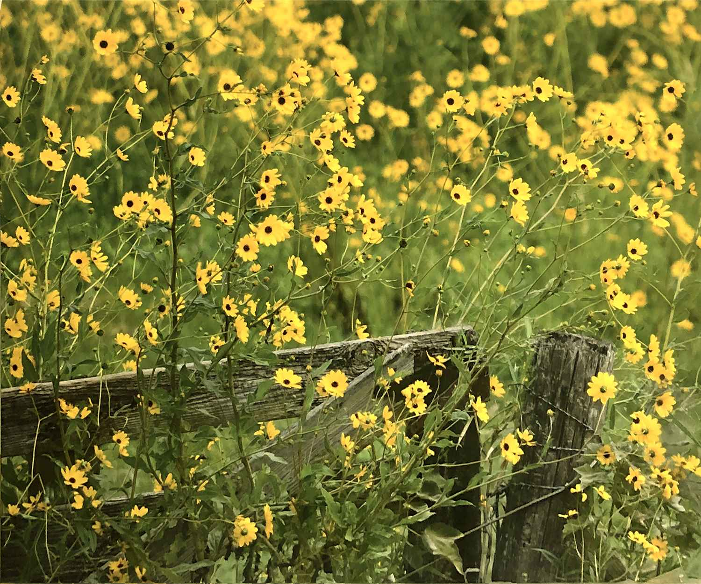 Happy Little Flowers ... by  Savannah Leigh - Masterpiece Online