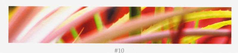 Bromeliad 10 by  Allen Maertz - Masterpiece Online