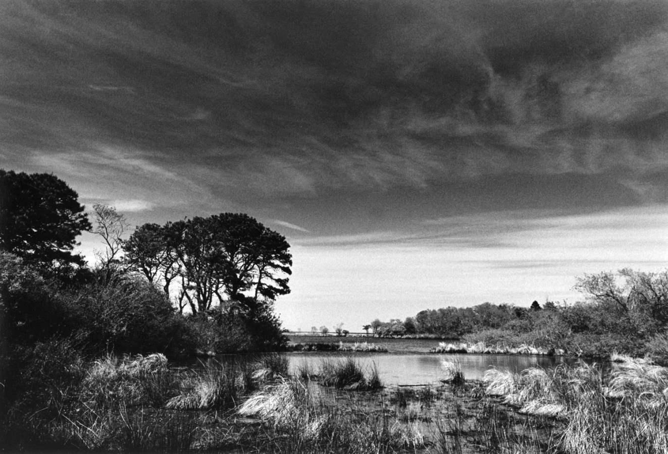 Sheriff's Meadow 1978... by  Alison Shaw - Masterpiece Online