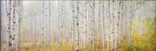 Aspen Mist by  Steven Friedman - Masterpiece Online