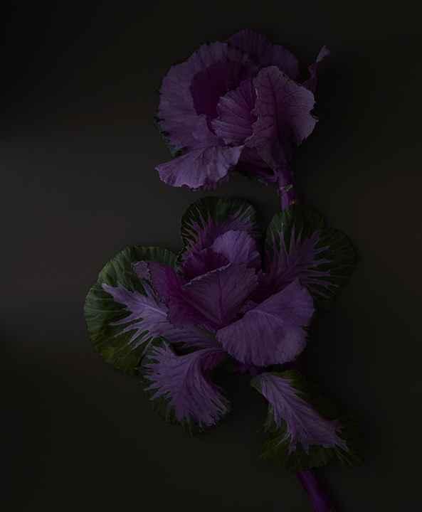 Kale Flower  by  Christopher Bartlett