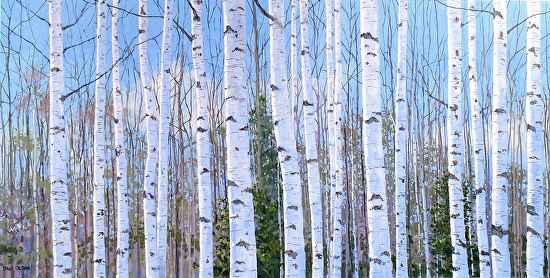 Birches 3