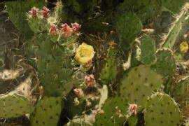 Dessert Bloom by Mr Mitch Caster - Masterpiece Online